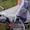продаю коляску адамекс II с люлькой зима-лето #623815
