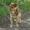 Пропала собака.Пожалуйста, помогите найти #673100
