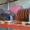 Полотна транспортеры картофелекопалок КТН -2ВМ,  КСТ-1, 4,  Л-651 #742266