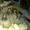 Встряхиватель КНТ 37.030  короткий вал на картофелекопалку КТН-2В #741188