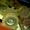 Вал каскадного элеватора КНТ 30.010 для картофелекопалки КТН-2В - Изображение #2, Объявление #741206