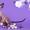 """Питомник канадских сфинксов """"Скорпион"""". - Изображение #2, Объявление #1322500"""