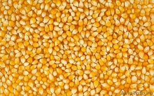 На посевную кампанию 2018 года семена кукурузы - Изображение #1, Объявление #1599562